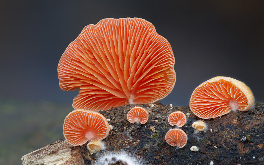 mushrooms-foto_23