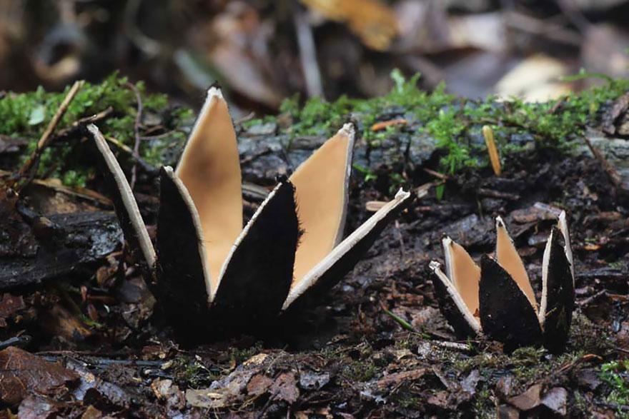 mushrooms-foto_25