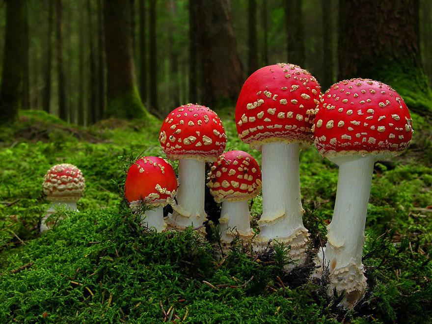 mushrooms-foto_27