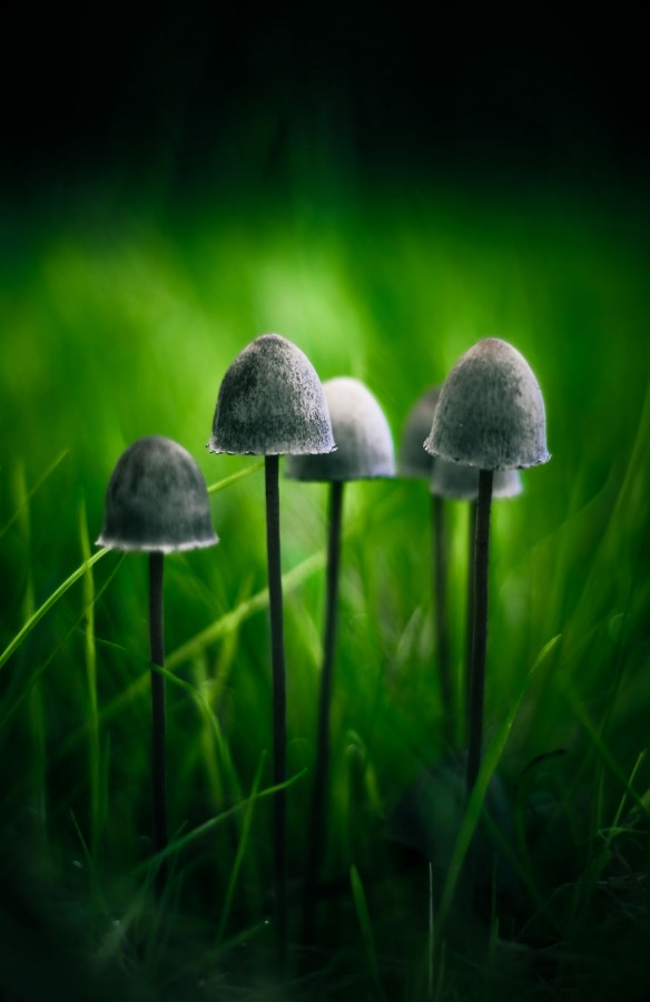mushrooms-foto_36