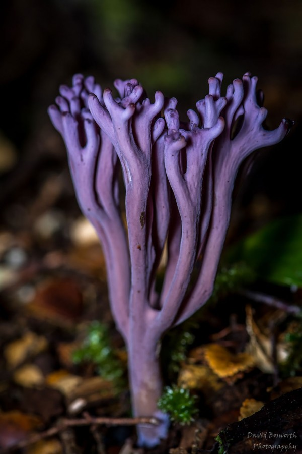 mushrooms-foto_37