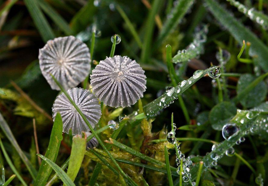 mushrooms-foto_48
