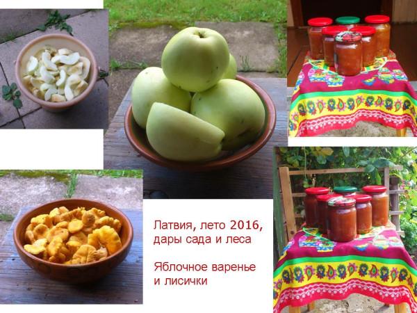 Латвия 2016_Яблочное варенье и лисички