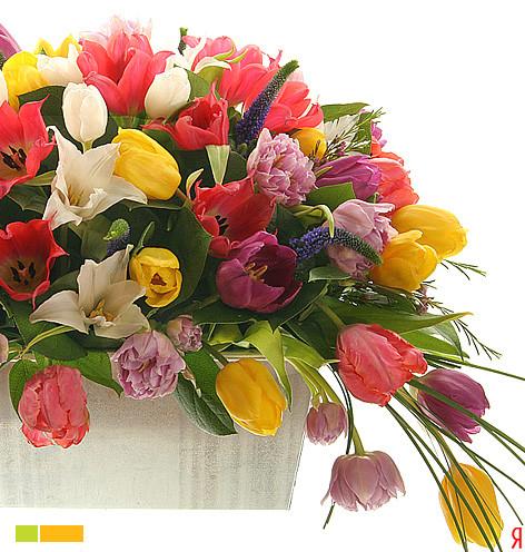 Роскошный букет тюльпанов
