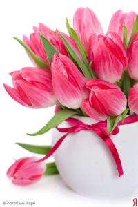 Роскошные нежные тюльпаны