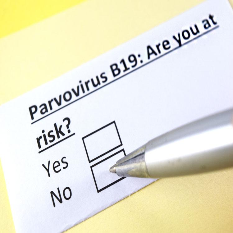 парвовирус