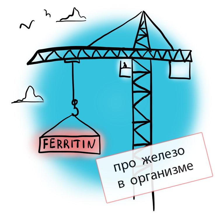ферритин2