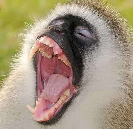 0-1398201630_primats
