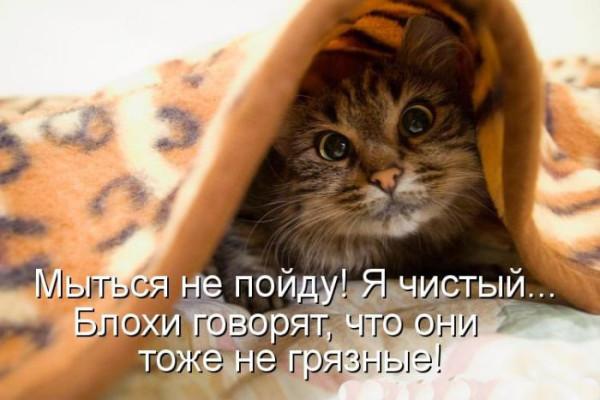 1354261899_kotomyauk-6