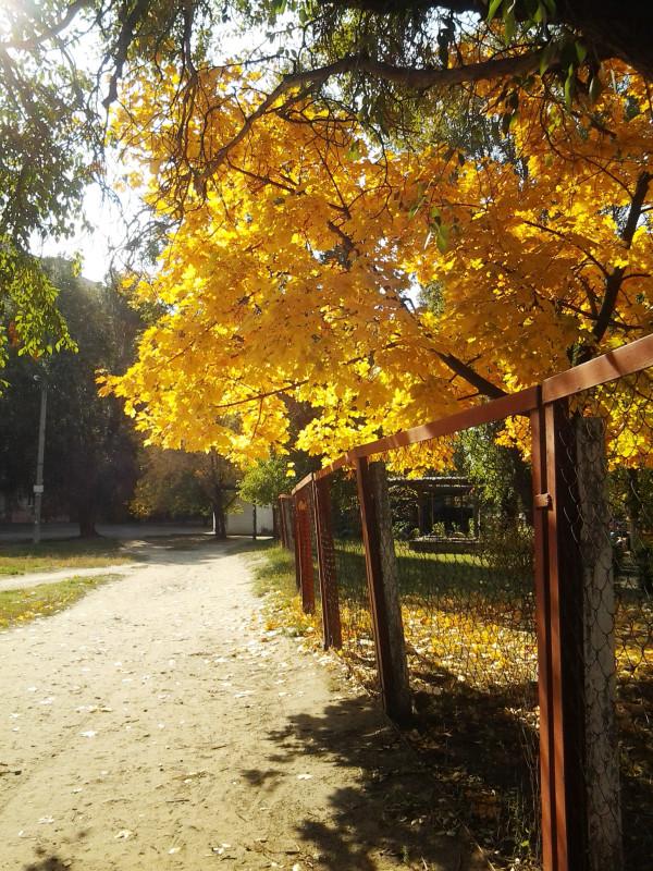 Наша золотая осень :)