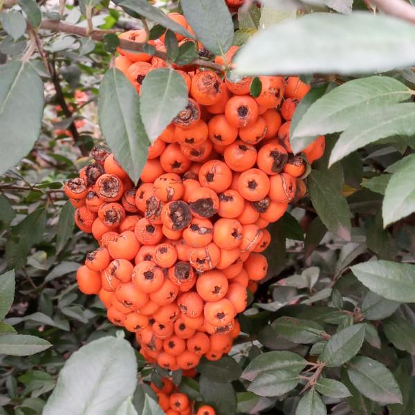 Пешком по Днепру, или Ботанические наблюдения
