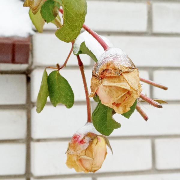 Цветы по понедельникам