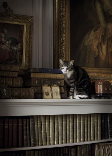 кот и книги