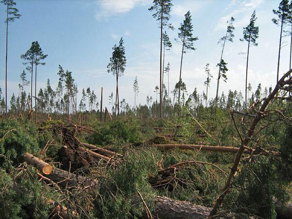 крылья треугольной лес после бури фото растение