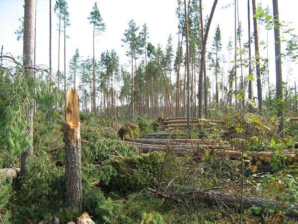оказалось, лес после бури фото что пополнении