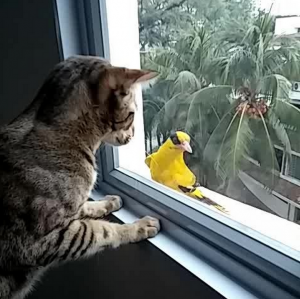 Tigger and Birdie