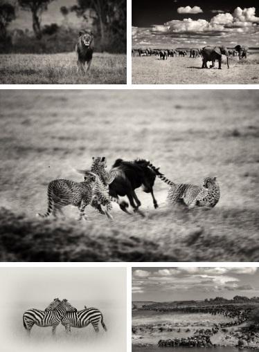 Immortalised beauty of the Kenyan plains