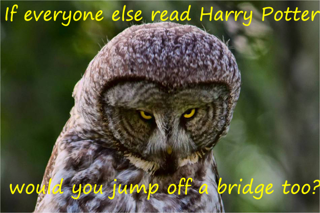 Judgmental owl