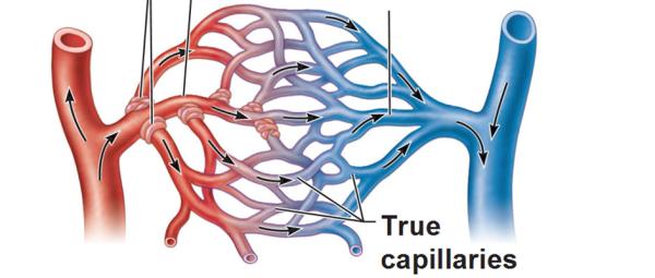 capillar2