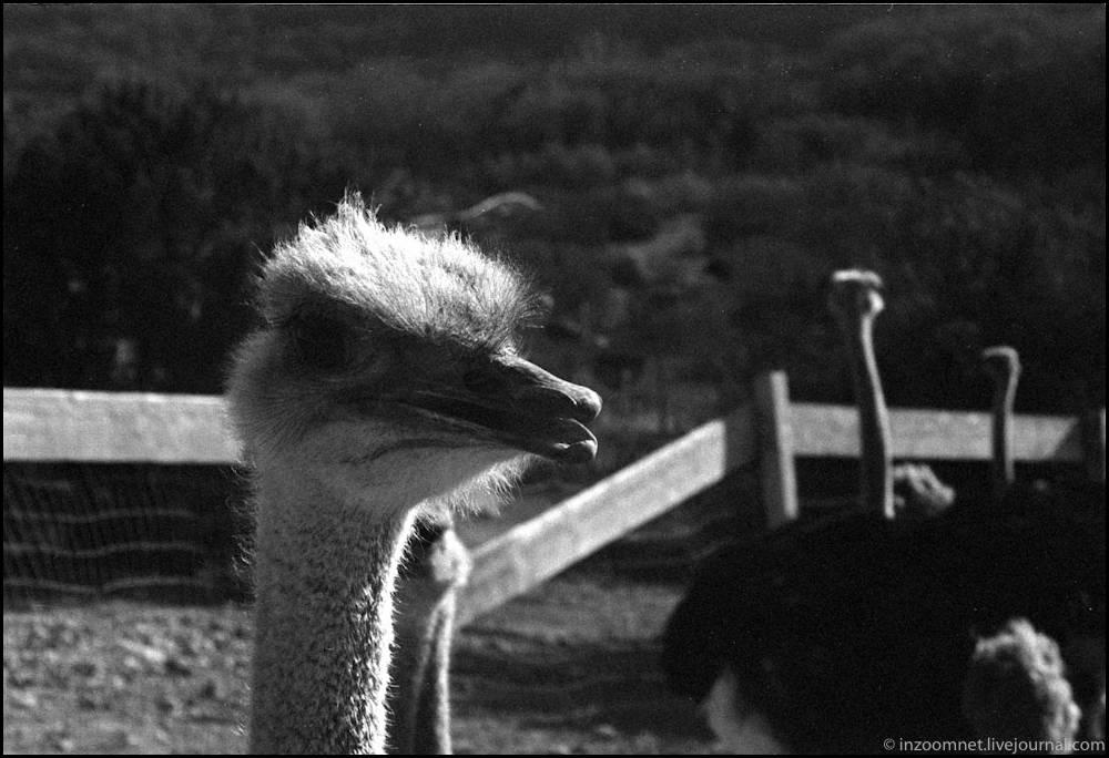 ostrichland-2