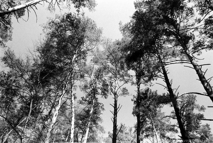 Forest-3
