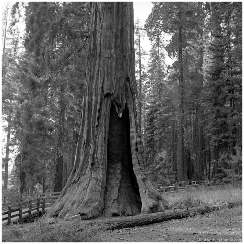 SequoiaPark06s.jpg