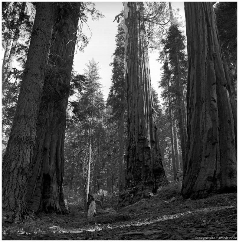 SequoiaPark07s.jpg