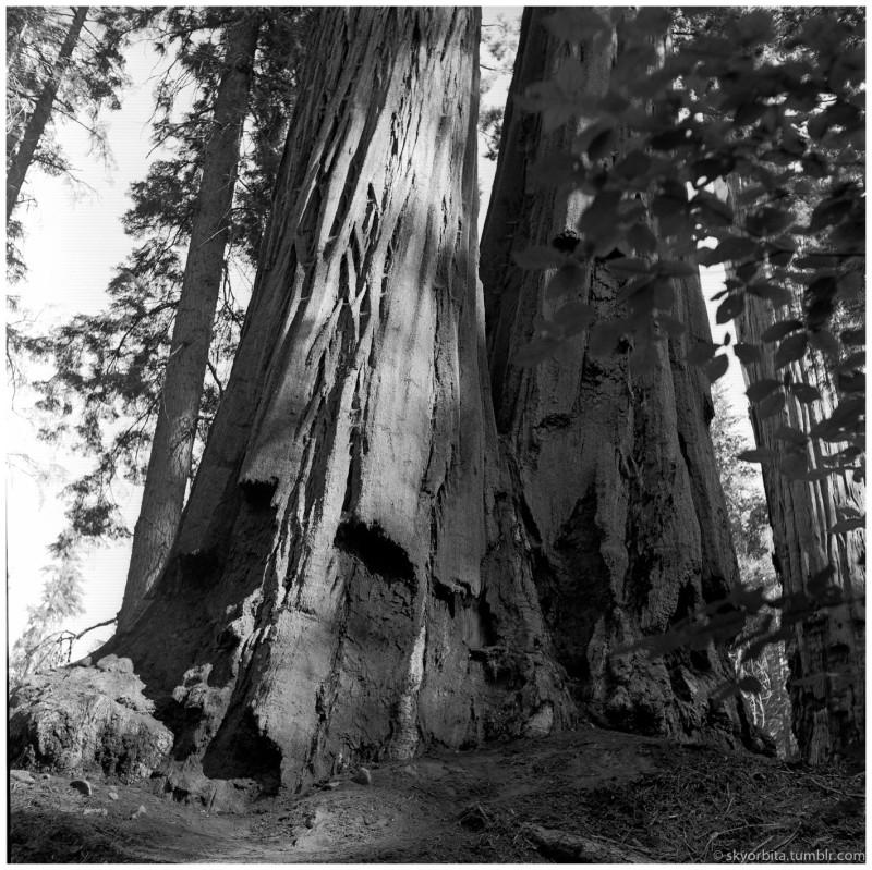 SequoiaPark08s.jpg