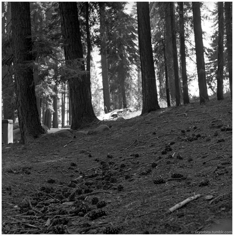 SequoiaPark10s.jpg