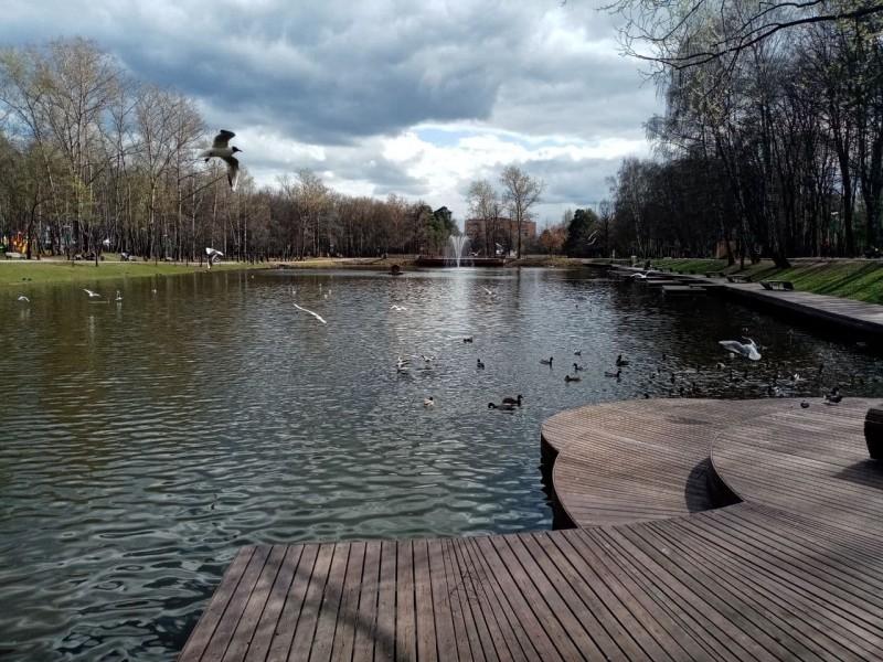 Вода, небо и птицы: утки и чайки.