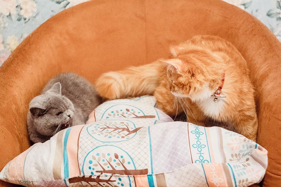 Kitties by Irella Lisitsyna