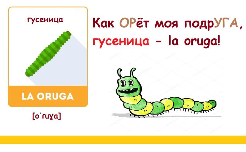 гусеница по-испански с транскрипцией