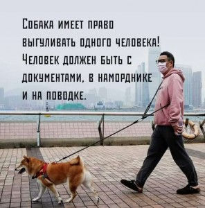Each dog has a right to walk out one human. The latter must have a valid ID and a COVID-pass, be muzzled and on a leash.
