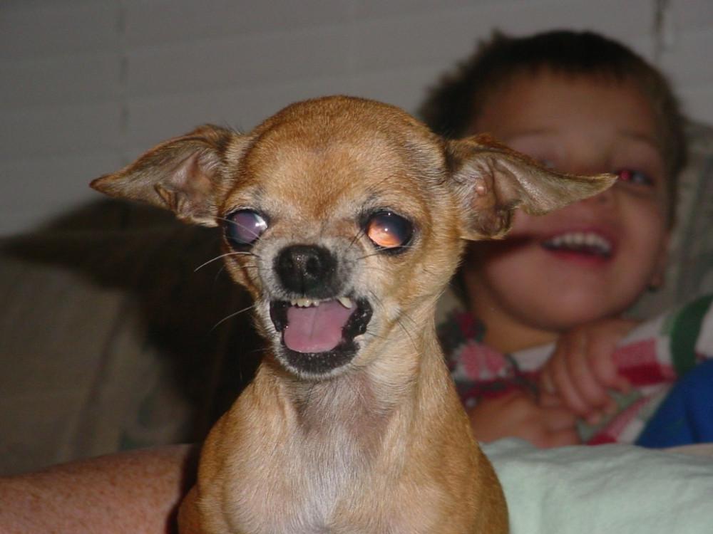 наши злая маленькая собачка картинки отпевание