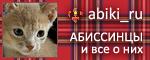 Сообщество abiki_ru: Абиссинцы и все о них!