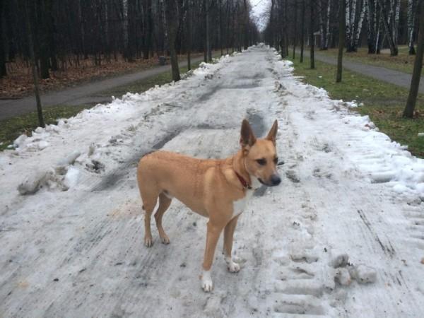 Снег в парке УТРО
