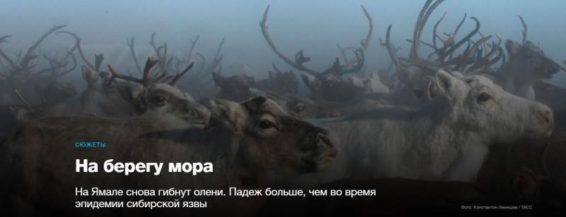 Ямал ОЛени
