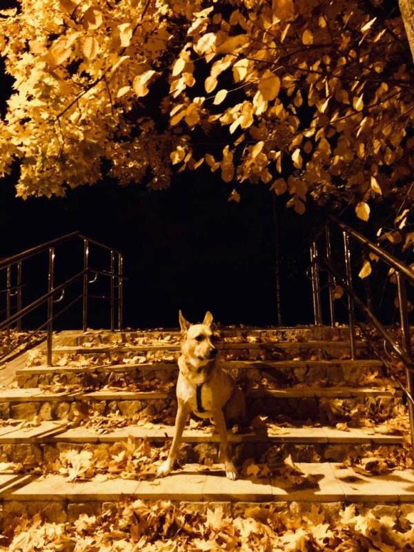 Чарли и Осень ночь