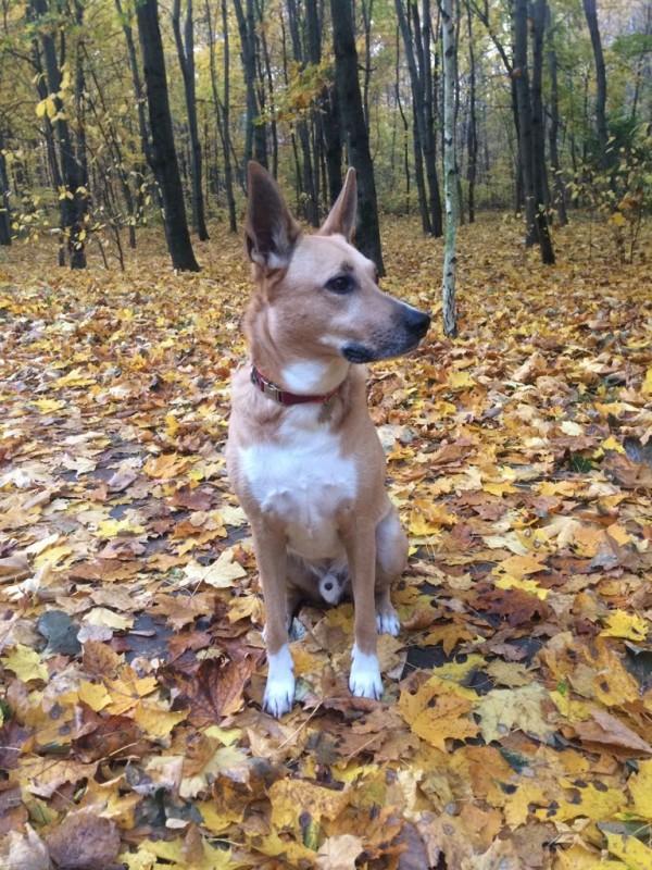 Чарли и Осень