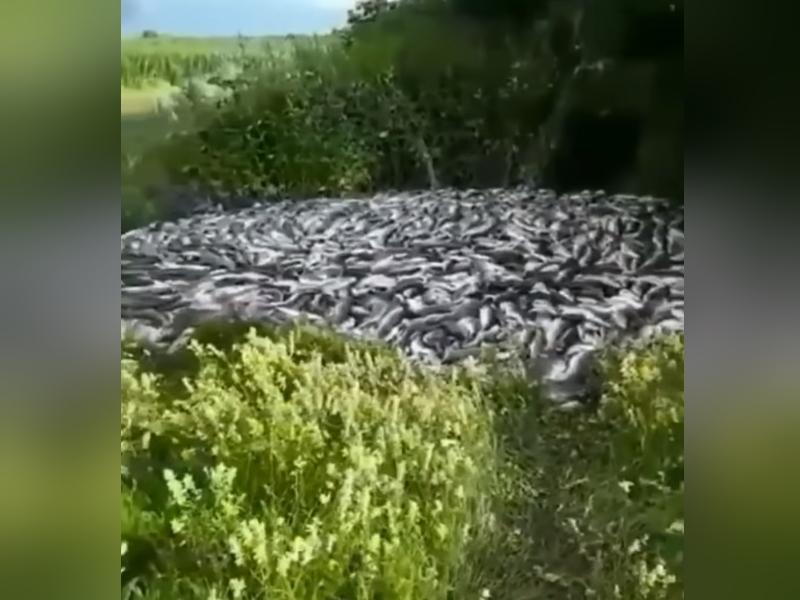 Выброшенная рыба
