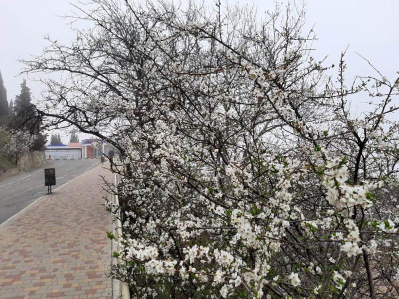 Крым цветение