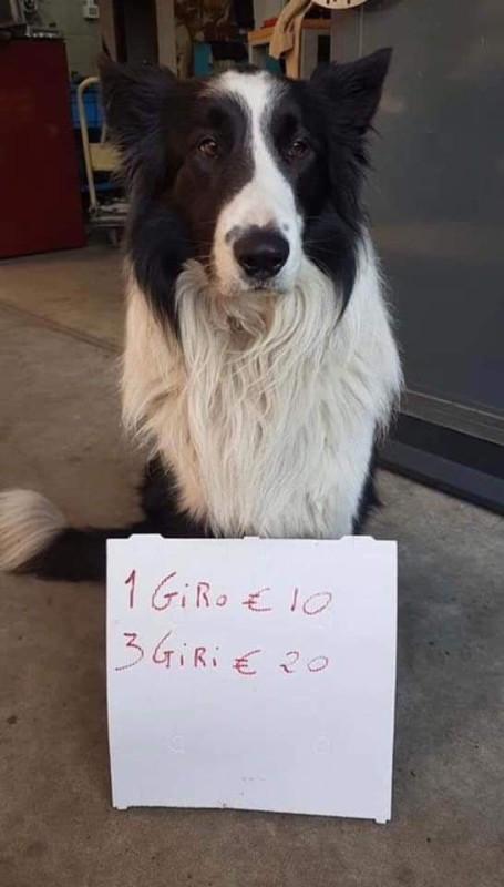Собака аренда