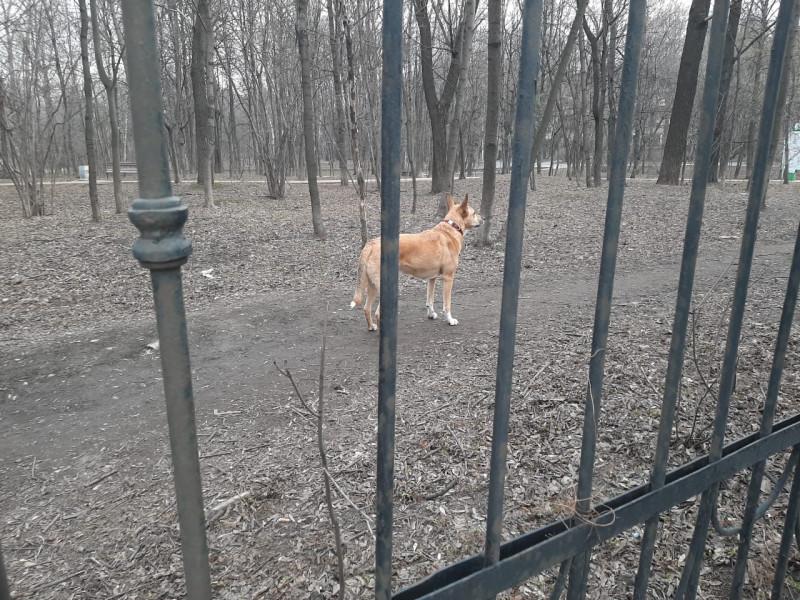 Чарли в парке 1