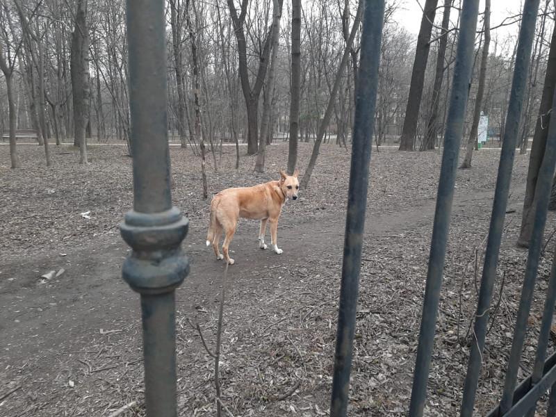 Чарли в парке 2