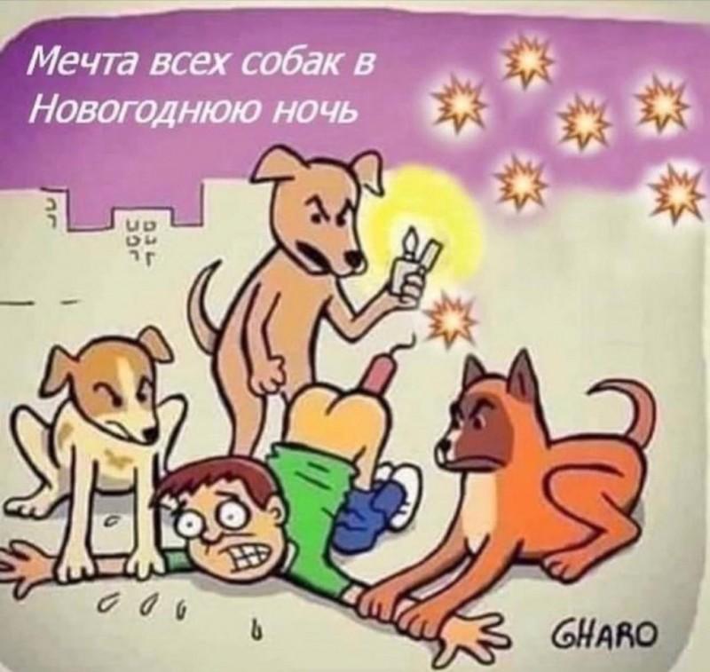 мечта собак