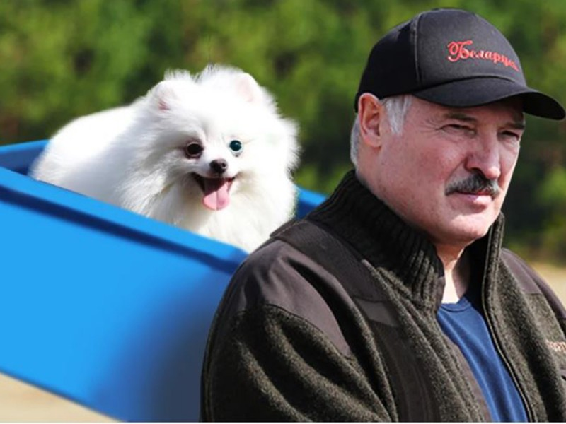Лукашенко и Моська