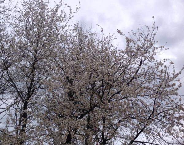 Крым Дерево