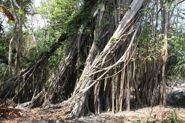 Дерево жизни 1