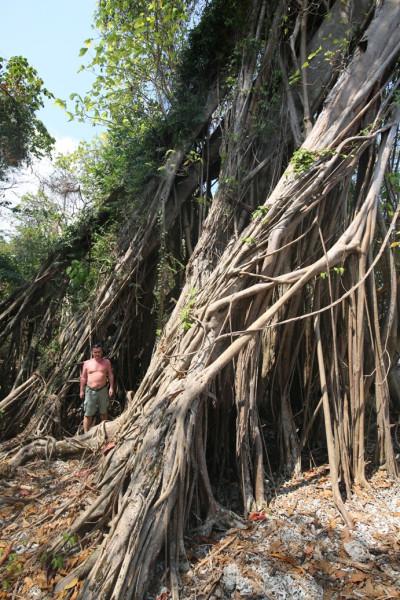 Дерево жизни и я