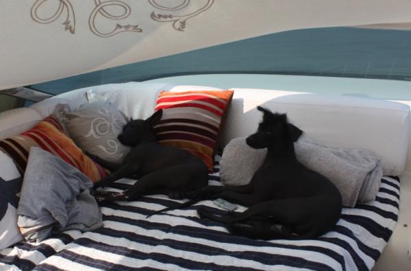 собаки на яхте 2